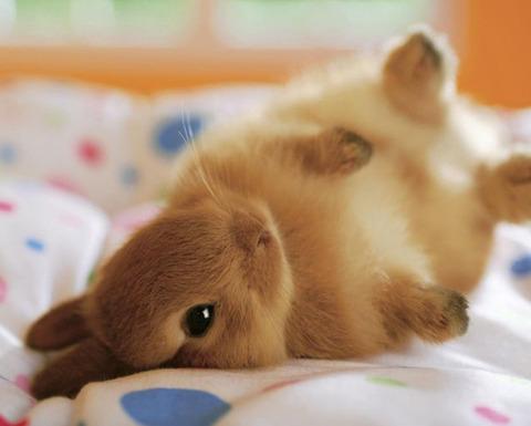ウサギが大好き!料理を楽しむ☆色々な種類のウサギグッズをご紹介♪のサムネイル画像